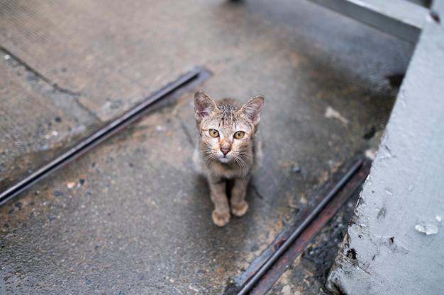 Gato olhando para você Foto gratuita