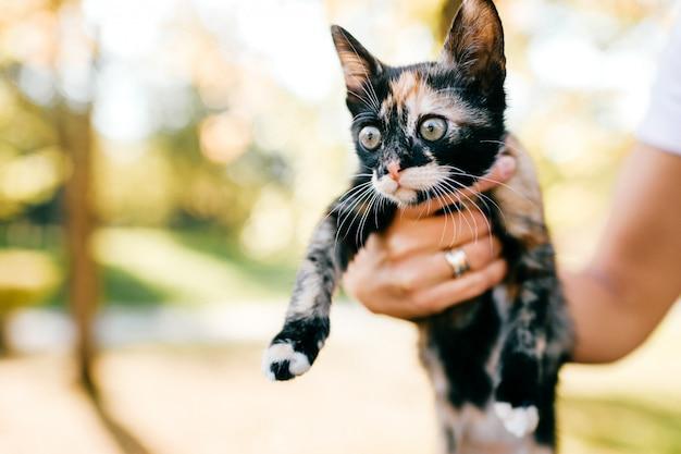 Gato peludo de raça pura Foto Premium