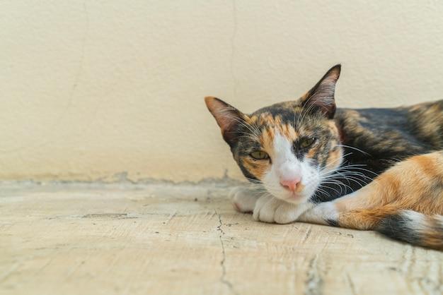 Gato preguiçoso deitado com sono no chão. Foto Premium