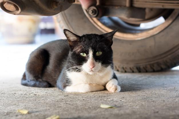 Gato preto deitado debaixo de um carro Foto Premium