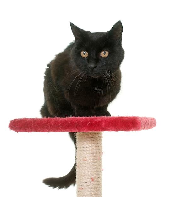 Gato preto velho no poste Foto Premium