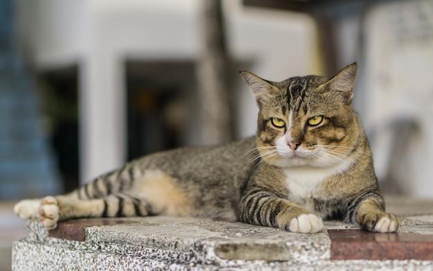 Gato relaxando Foto Premium
