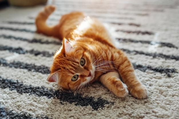 Gato ruivo deitado no tapete do chão em casa. animal de estimação brincando com tapete Foto Premium