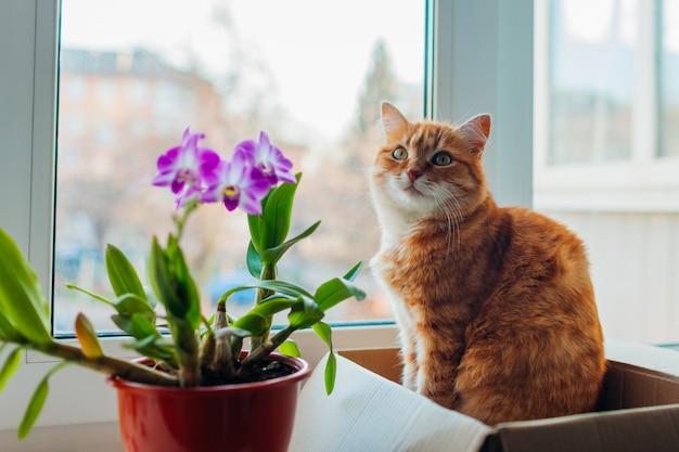 Gato ruivo sentado na caixa da caixa no peitoril da janela em casa. animal de estimação relaxante por plantas Foto Premium