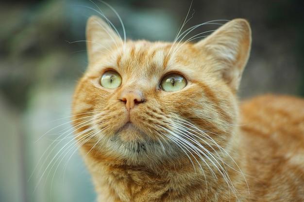 Gato ruivo Foto gratuita