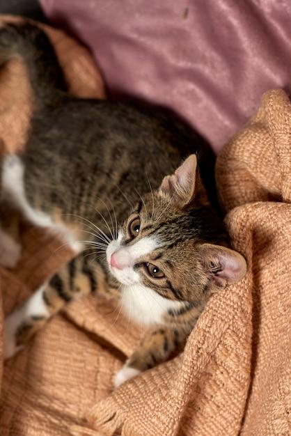 Gato sentado no cobertor de cama pronto para jogar Foto Premium