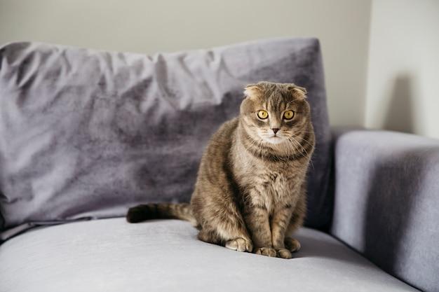 Gato sentado no sofá Foto Premium
