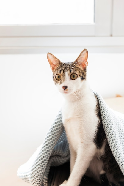 Gato sob o cobertor perto da janela Foto gratuita