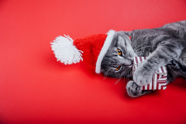 Gato tigrado cinza usa chapéu de papai noel em vermelho e brinca com uma caixa de presente. Foto Premium