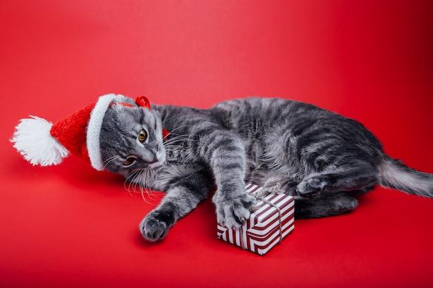 Gato tigrado cinzento usa chapéu de papai noel em fundo vermelho e brinca com uma caixa de presente. Foto Premium