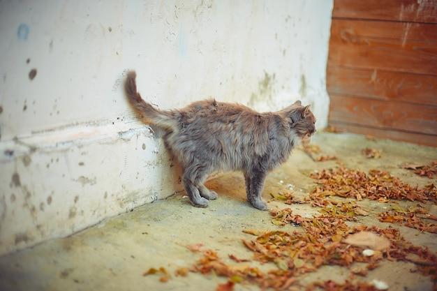 Gato velho se aquecendo ao sol de outono em uma casa de campo Foto Premium