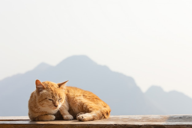 Gato vermelho que toma sol ao sol com fundo da montanha. Foto Premium