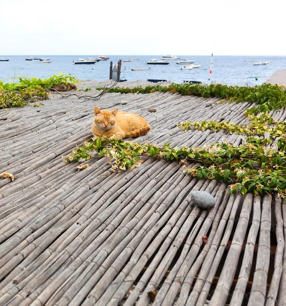 Gato vermelho relaxante perto do mar em positano Foto Premium