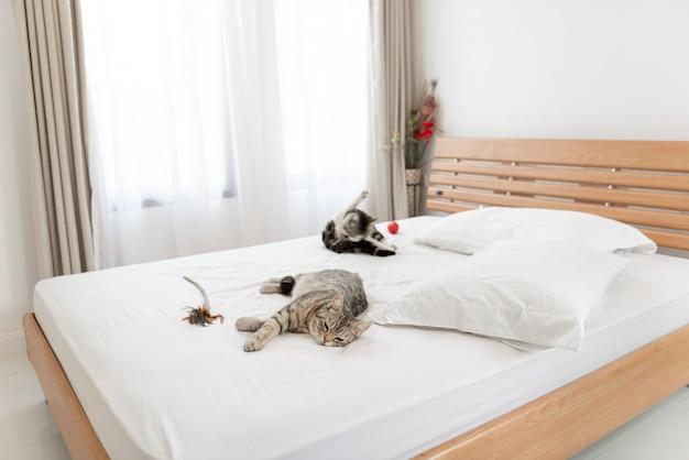Gatos adoráveis dormem na cama branca aconchegante no interior do quarto moderno Foto Premium