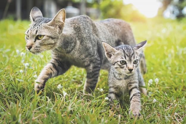 Gatos bonitos andando jogando na grama verde Foto Premium
