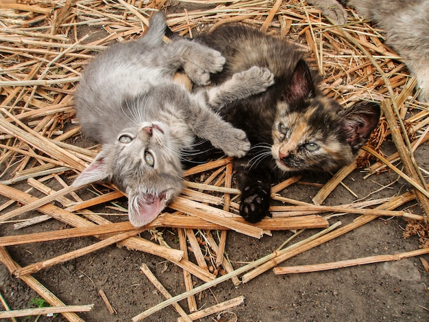 Gatos e campo. Foto Premium