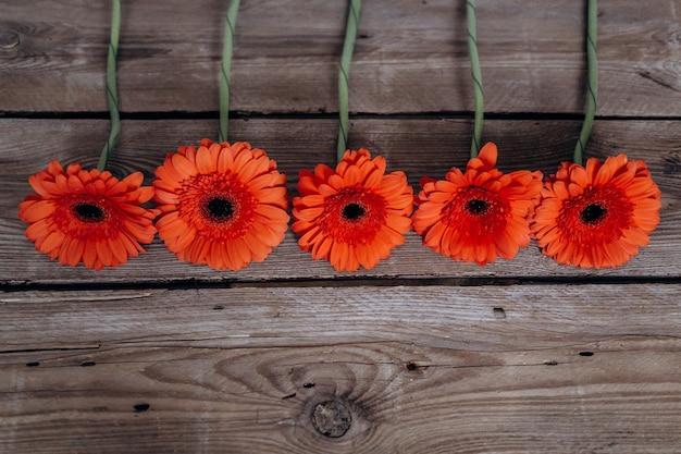 Gerbera flores sobre um fundo cinza de madeira Foto Premium