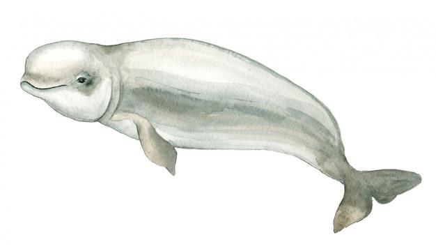 Golfinho branco em aquarela Foto Premium