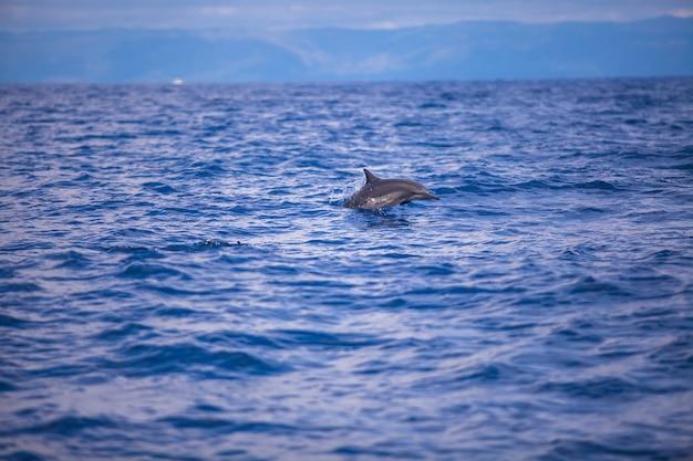 Golfinhos nadando em mar aberto, bohol, filipinas Foto Premium