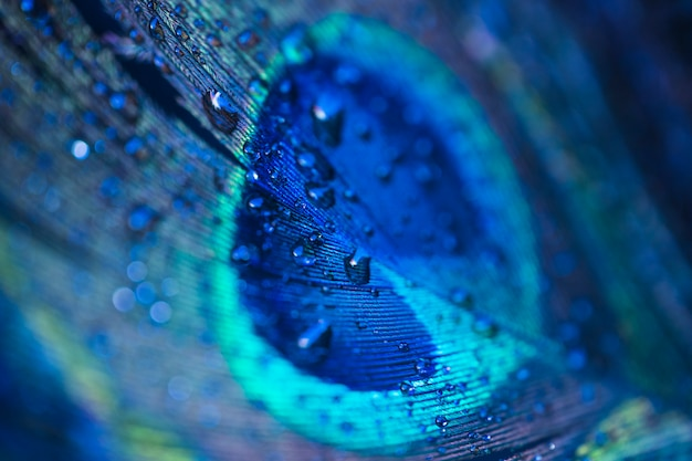Gotas de água doce em fundo de penas de pavão Foto gratuita