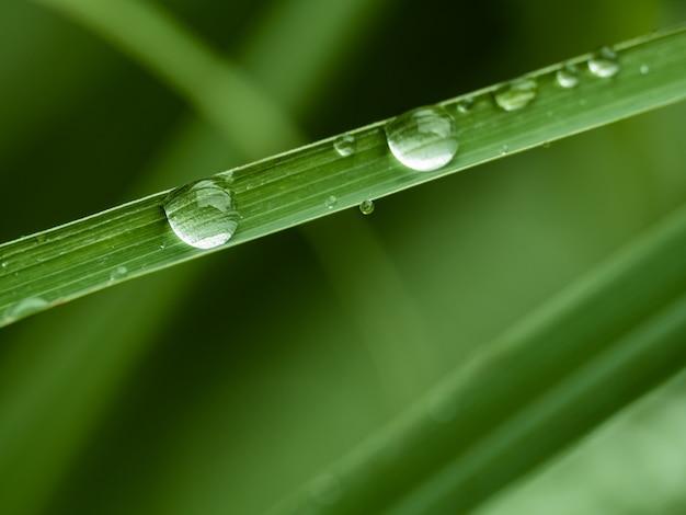 Gotas de água na grama verde Foto Premium