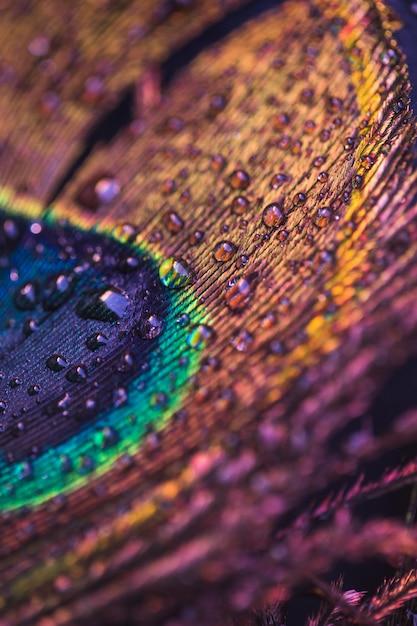 Gotas de água na superfície da pena de pavão colorido Foto gratuita