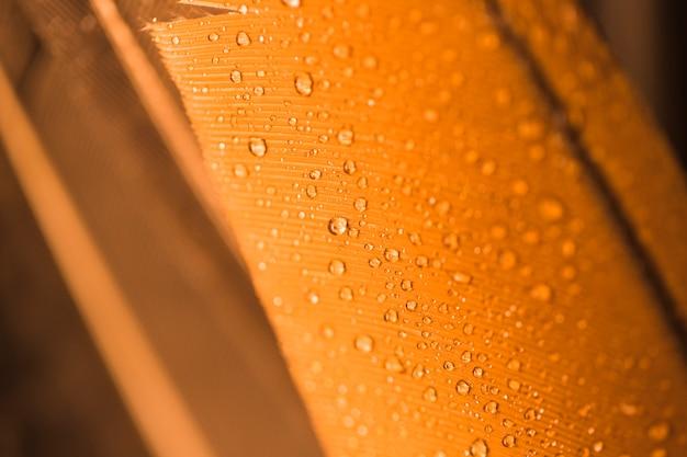 Gotas de água na superfície texturizada dourada Foto gratuita