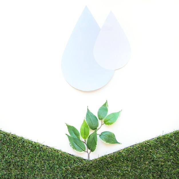 Gotas de água sobre pequena árvore Foto gratuita