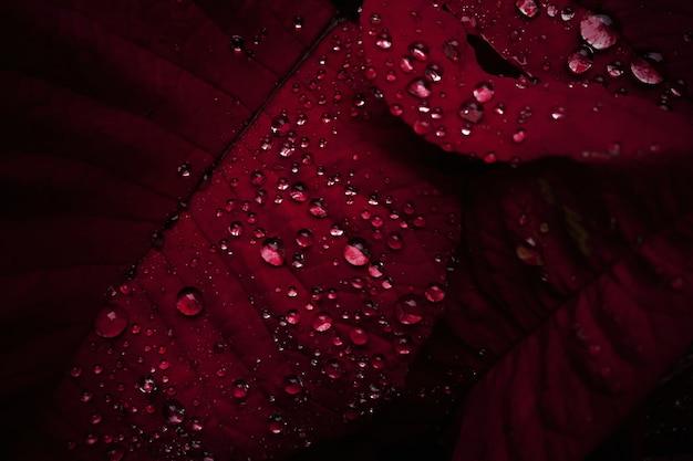 Gotas de orvalho close-up nas folhas vermelhas Foto gratuita