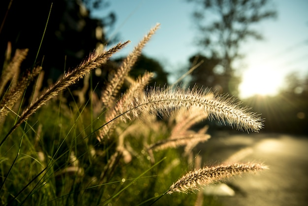 Grama com luz do sol na zona rural suburbana Foto gratuita