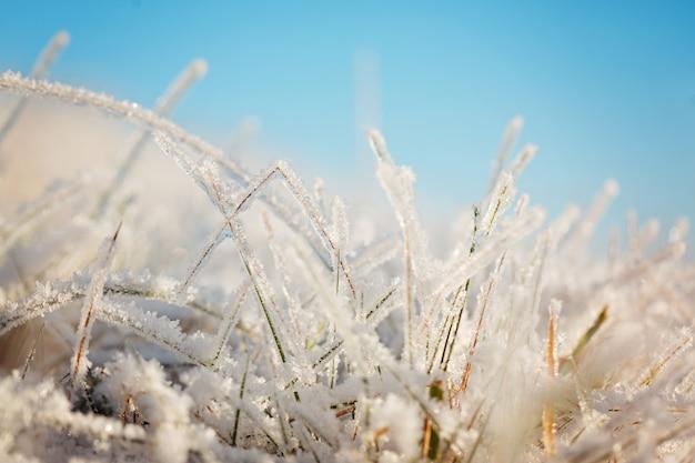 Grama congelada no céu azul backgound. Foto Premium