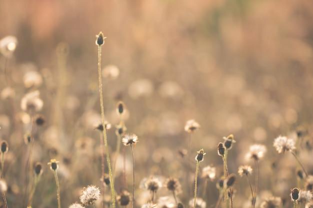 Grama de flores coloridas feita com gradiente de fundo Foto Premium