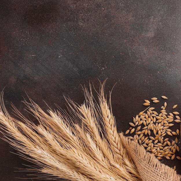 Grama e sementes de trigo Foto gratuita