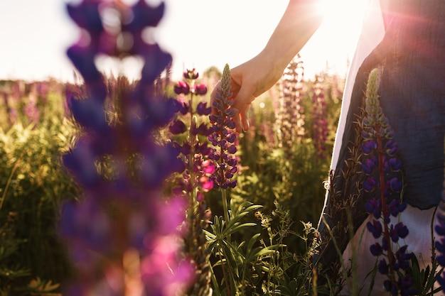 Grama tocante da flor da mão da mulher no campo com luz do por do sol. Foto gratuita