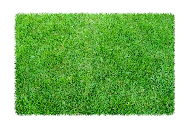 Grama verde. fundo de textura natural. grama verde primavera fresca Foto Premium