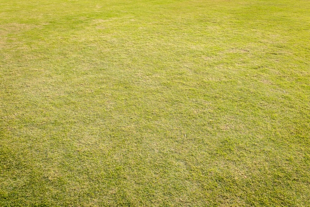 Gramado com grama verde. grama verde para o fundo. Foto Premium