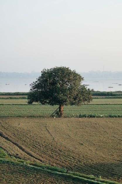 Grande árvore solitária no campo Foto gratuita
