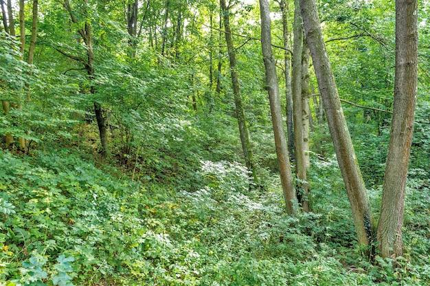 Grande clareira no parque, coberta de grama entre um coníferas e árvores de folha caduca no dia de outono Foto Premium
