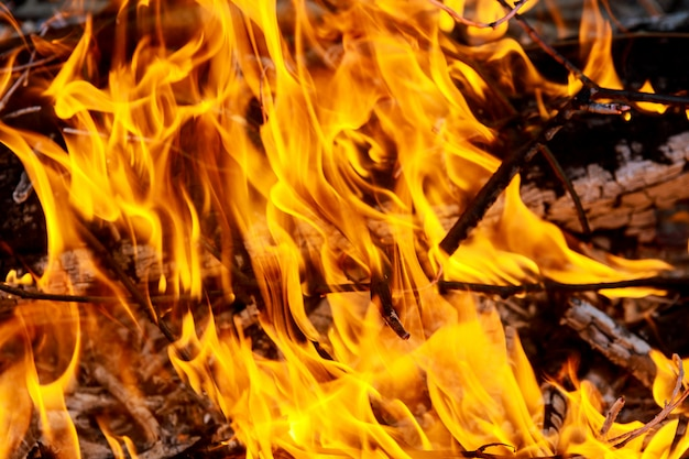 Grande fogo queimando ramos de oliveira após a poda Foto Premium