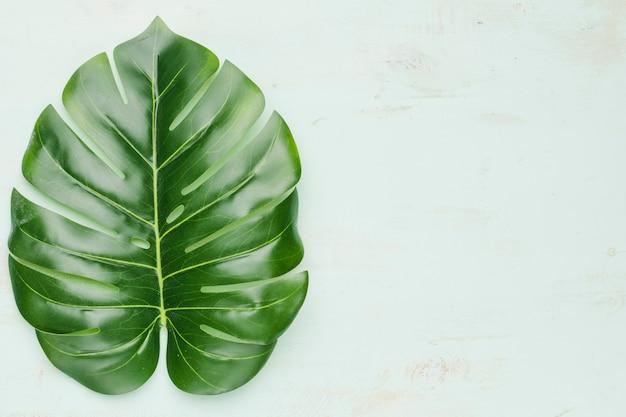 Grande folha tropical no fundo claro Foto gratuita