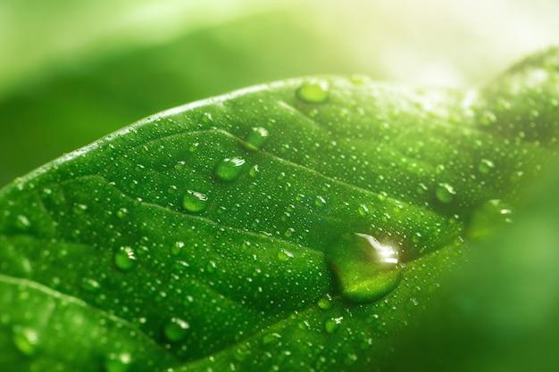 Grande orvalho macro ou pingos de chuva na folha verde, close-up. Foto Premium
