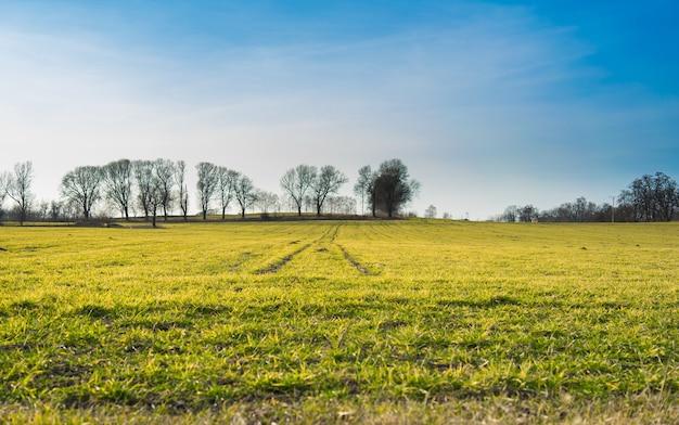 Grande paisagem verde coberta de grama e cercada por árvores Foto gratuita