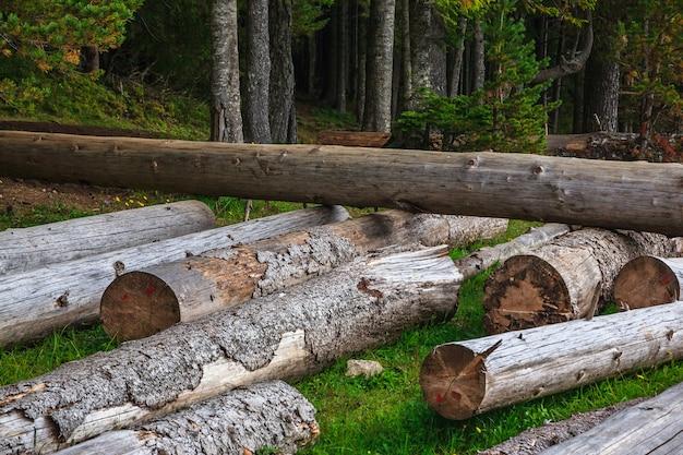Grande pilha de troncos maciços ao lado da floresta durante o outono Foto Premium