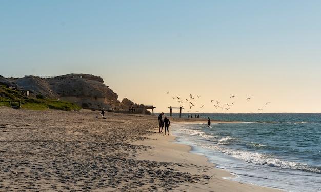 Grande plano de gaivotas se alimentando no mar durante o pôr do sol em manta ray bay, na austrália ocidental Foto gratuita