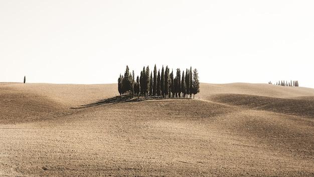 Grande plano de pinheiros em um campo no deserto sob o céu claro Foto gratuita