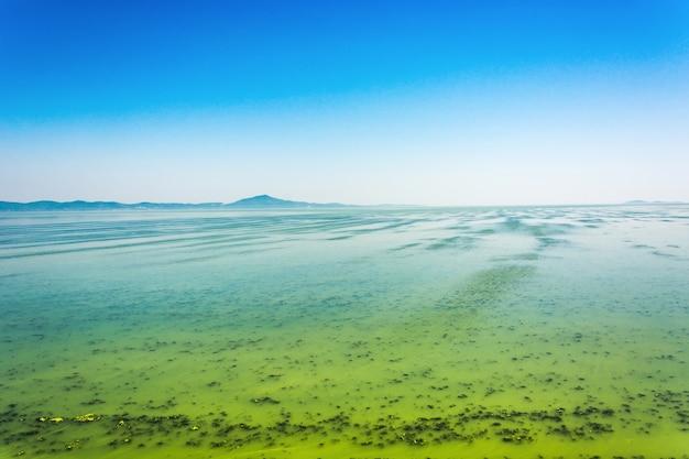 Grande rio ucraniano dnepr coberto por cyanobacterias como resultado de verões quentes Foto gratuita