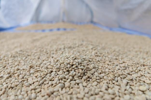 Grãos de café frescos secos na bandeja com tampa por folha de plástico em processo seco pela luz solar Foto Premium