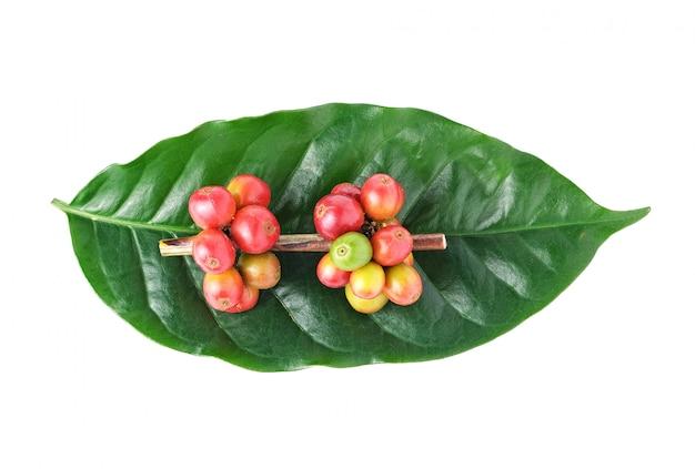 Grãos de café frescos Foto Premium