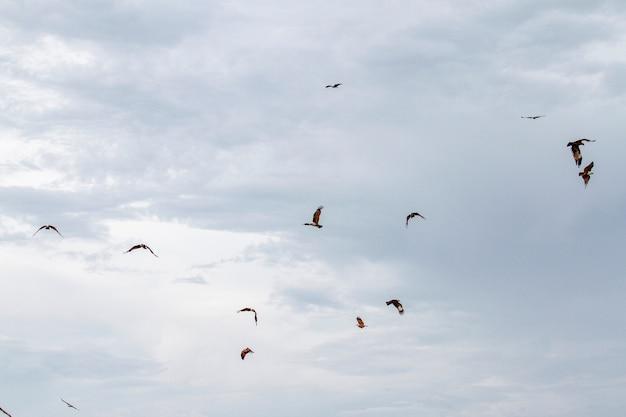Grupo de águia vermelha no céu na natureza na tailândia Foto Premium