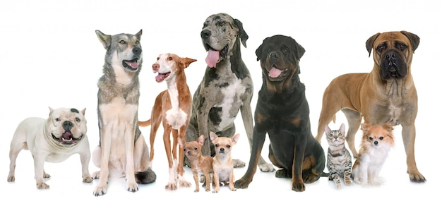 Grupo de animal de estimação Foto Premium